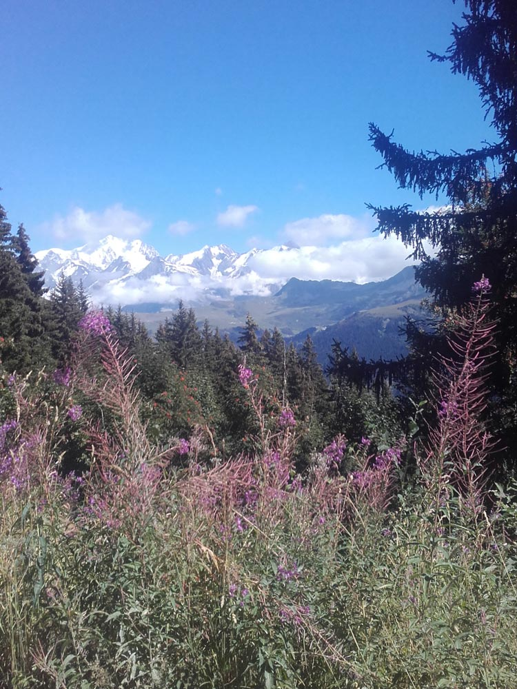 Vue du Mont-Blanc depuis la forêt